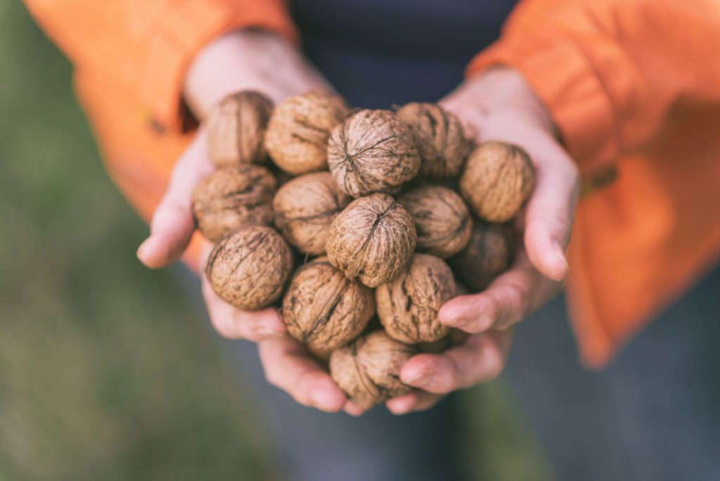 Is Walnut A Good Source Of Omega 3
